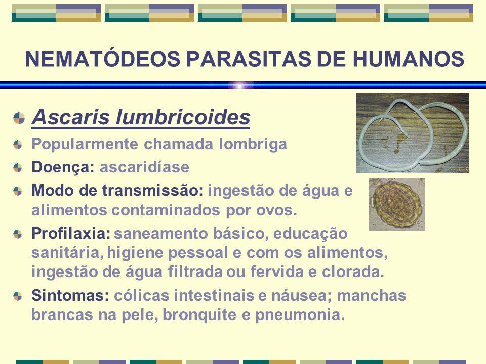 NEMATÓDEOS PARASITAS DE HUMANOS Ascaris lumbricoides Popularmente chamada lombriga Doença: ascaridíase Modo de transmissão: ingestão de água e aliment