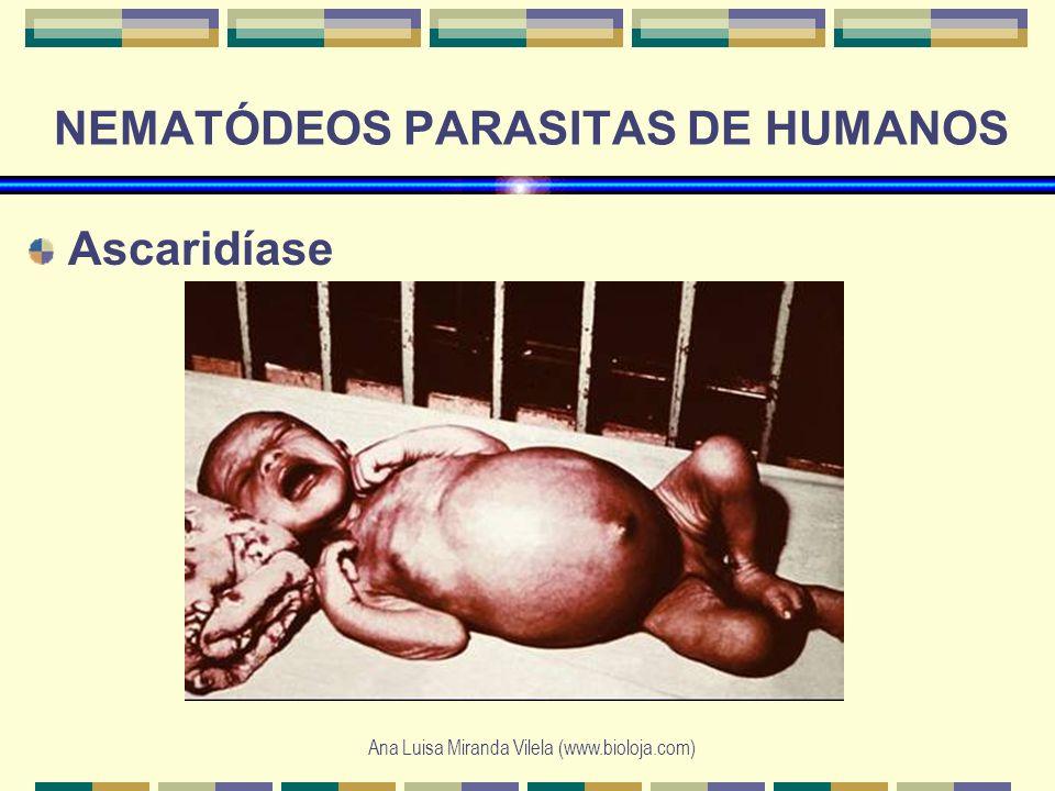 Ana Luisa Miranda Vilela (www.bioloja.com) NEMATÓDEOS PARASITAS DE HUMANOS Ascaridíase