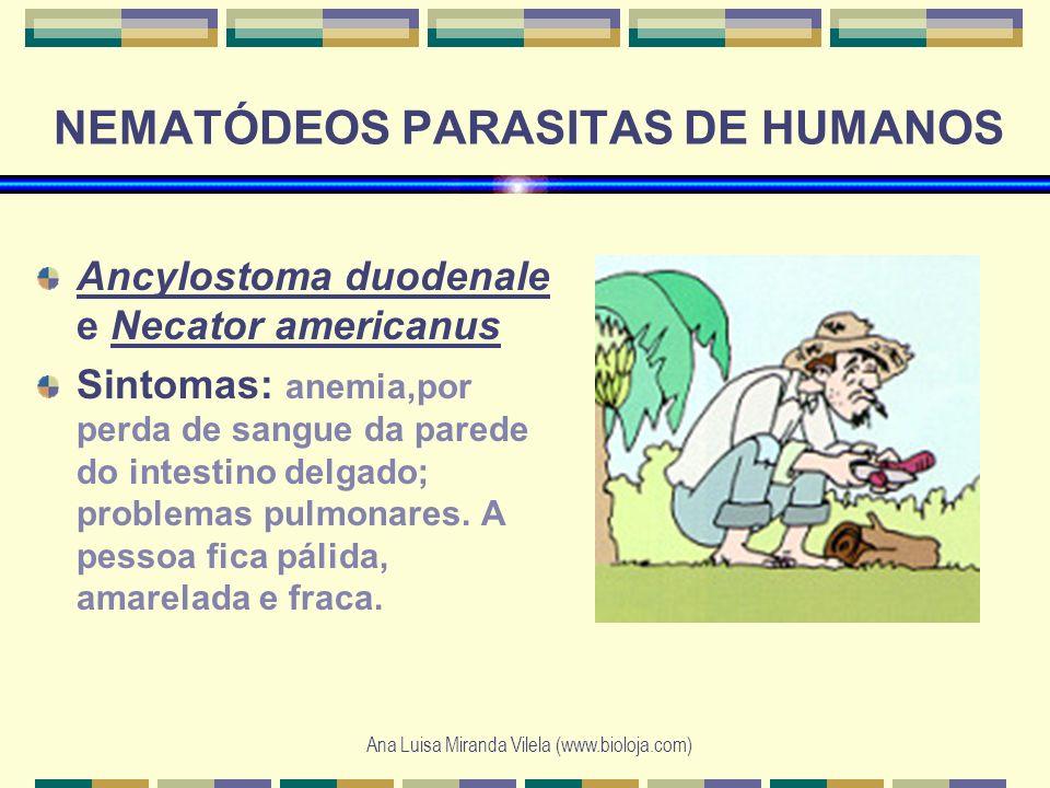 Ana Luisa Miranda Vilela (www.bioloja.com) NEMATÓDEOS PARASITAS DE HUMANOS Ancylostoma duodenale e Necator americanus Sintomas: anemia,por perda de sa
