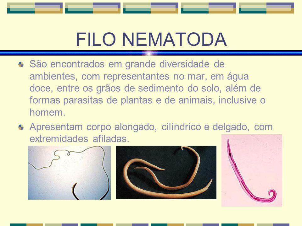 FILO NEMATODA Simetria bilateral Triblásticos Protostômios (primeiro a boca e somente depois o ânus) Pseudocelomados (cavidade que se forma entre a mesoderme e a endoderme)