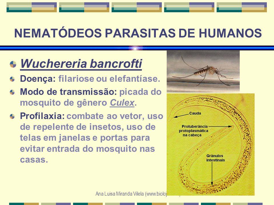 Ana Luisa Miranda Vilela (www.bioloja.com) NEMATÓDEOS PARASITAS DE HUMANOS Wuchereria bancrofti Doença: filariose ou elefantíase. Modo de transmissão: