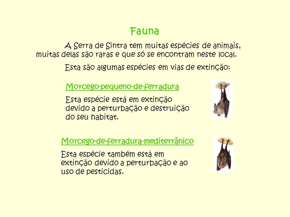 Fauna A Serra de Sintra tem muitas espécies de animais, muitas delas são raras e que só se encontram neste local. Esta são algumas espécies em vias de