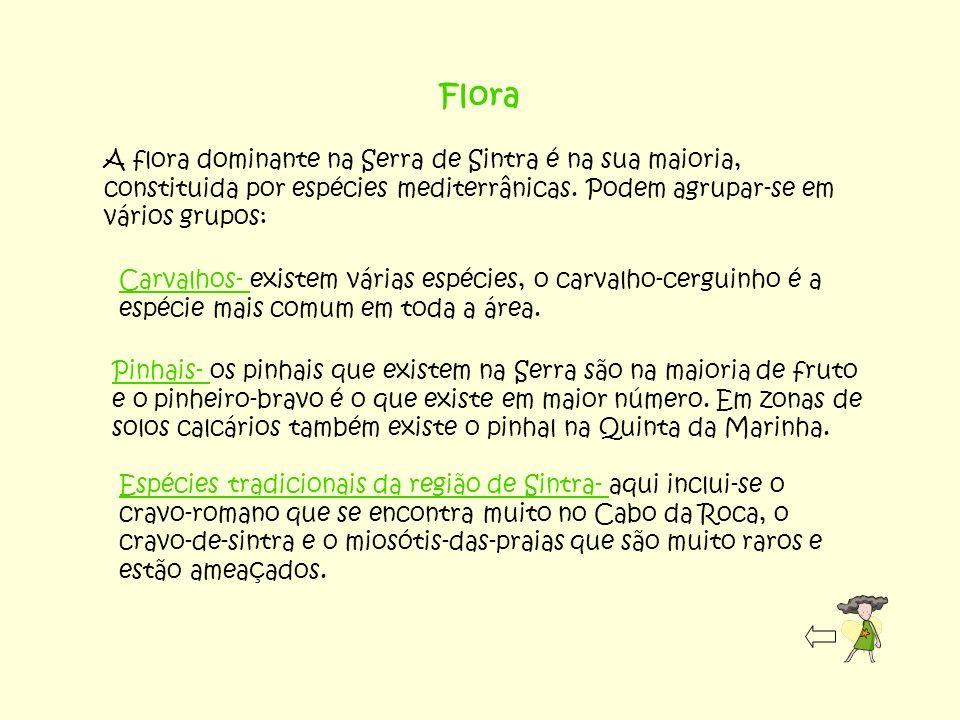 Flora A flora dominante na Serra de Sintra é na sua maioria, constituida por espécies mediterrânicas. Podem agrupar-se em vários grupos: Carvalhos- ex