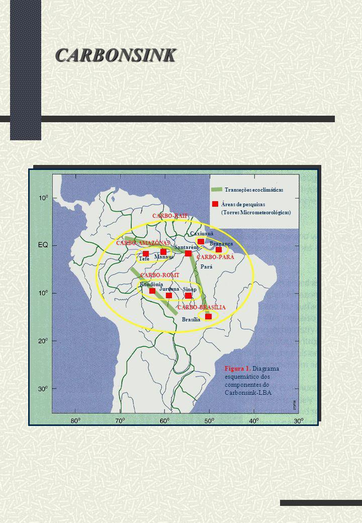 Santarém Pará Rondônia Sinop Juruena CARBO-BRASÍLIA CARBO-ROMT Bragança Caxiuanã Manaus Tefé CARBO-AMAZÔNAS CARBO-PARÁ CARBO-RAIF Áreas de pesquisas (
