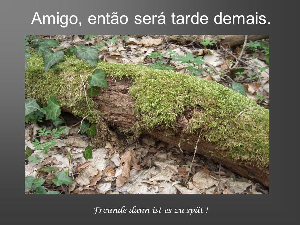 ja wenn kein Baum mehr steht Freunde dann ist es zu spät! Quando nenhuma árvore mais existir, meu amigo, então será tarde demais.