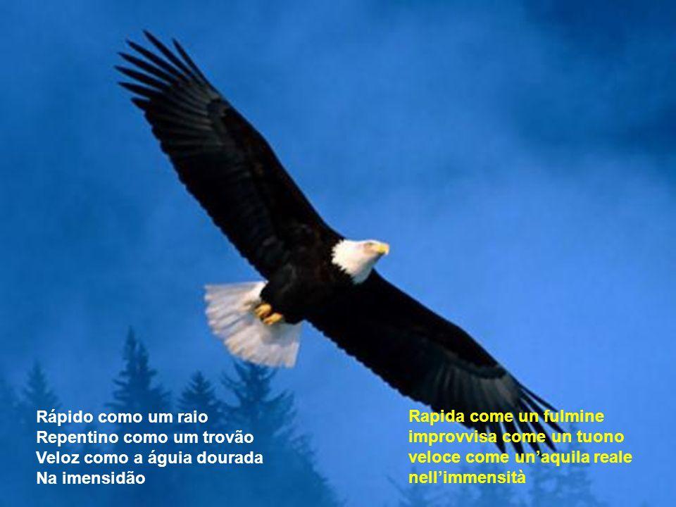 Aquila, mostrami la strada Come trovare terre lontane dalle spine Come lottare per questo mondo Come salvare questo nido Águia, me mostra no meu camin