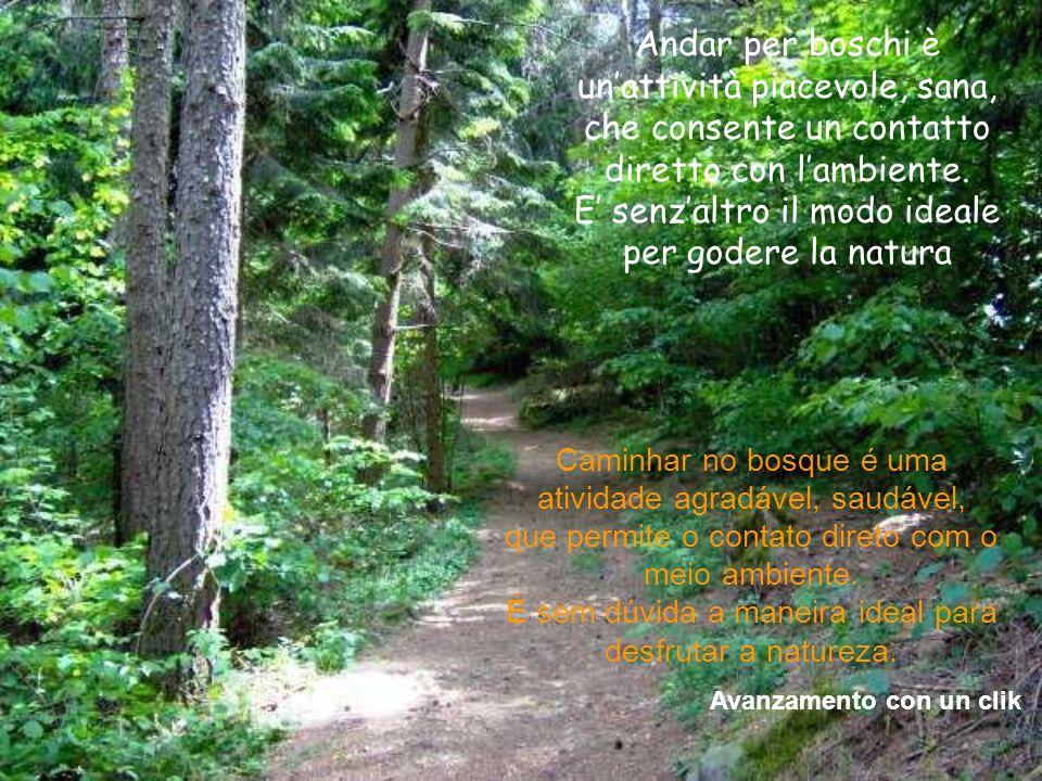 Andar per boschi è unattività piacevole, sana, che consente un contatto diretto con lambiente.