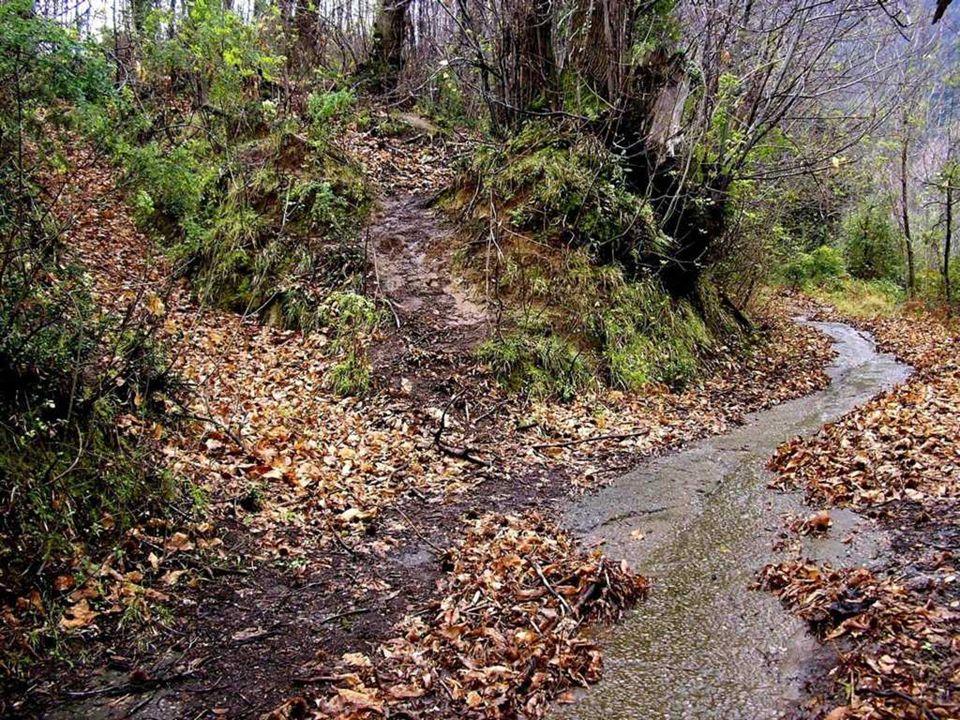 Ogni sentiero è una scelta. Qualunque sentiero si scelga da esso non si può tornare.