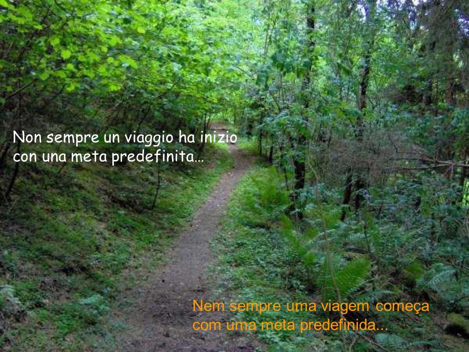…ce una strada nel bosco…... Existe uma estrada no bosque...