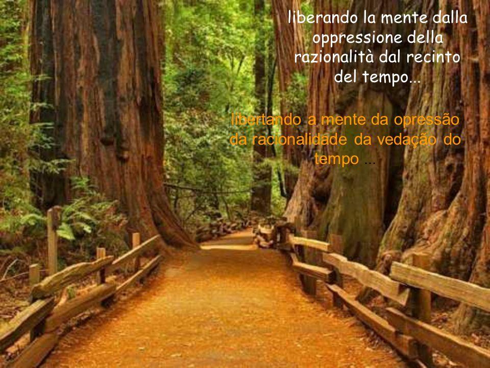 Ogni sentiero è una scelta.Qualunque sentiero si scelga da esso non si può tornare.