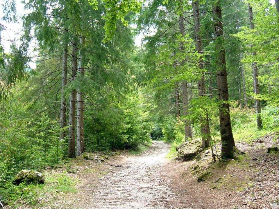 Nel bosco vivono mille creature e ognuna puo trovare quello che cerca: la farfalla e l ape i fiori, lo scoiattolo le nocciole dasgranocchiare, la formica le briciole, gli uccelli le bacche.