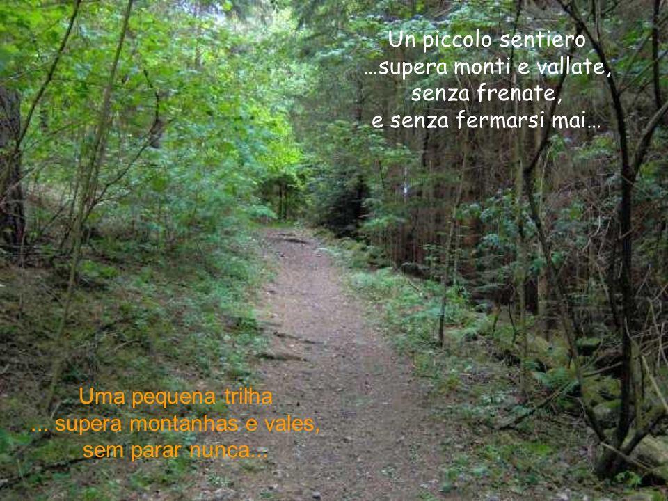 Ogni sentiero è un insegnamento che riceviamo per la nostra vita.
