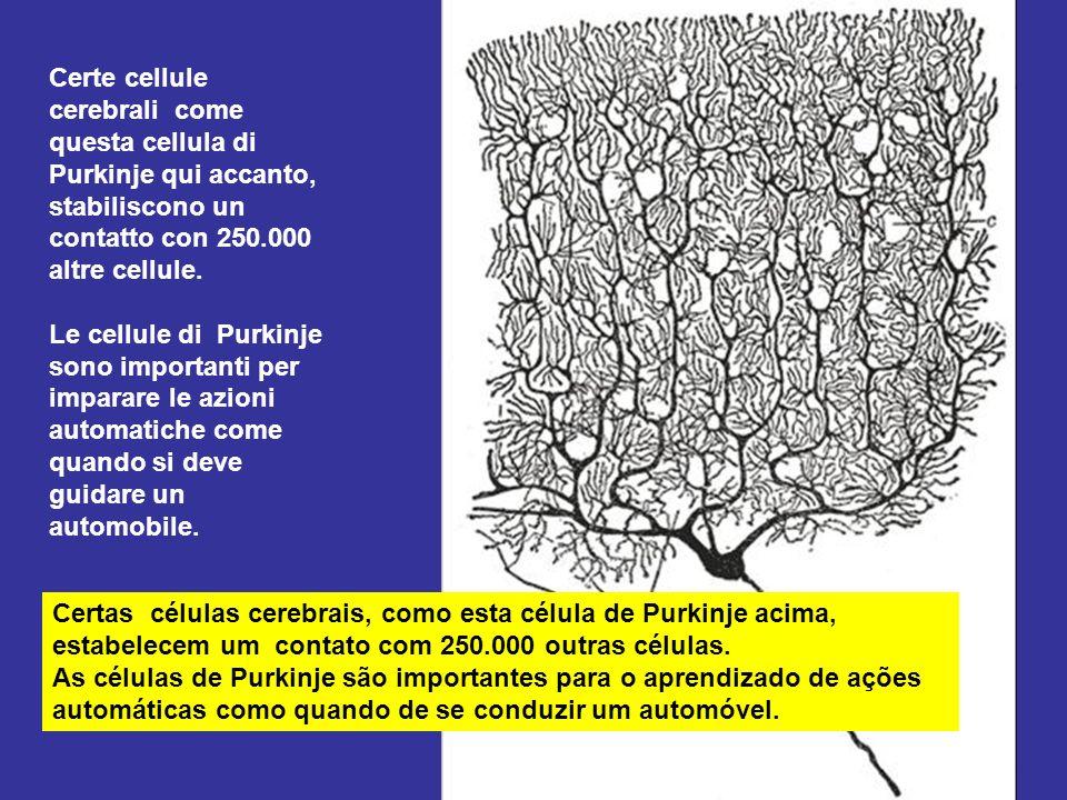 Il nostro cervello é composto da 100 miliardi di cellule cerebrali, che sono legate fra loro con migliaia di altre cellule. Nella nostra testa vi sono