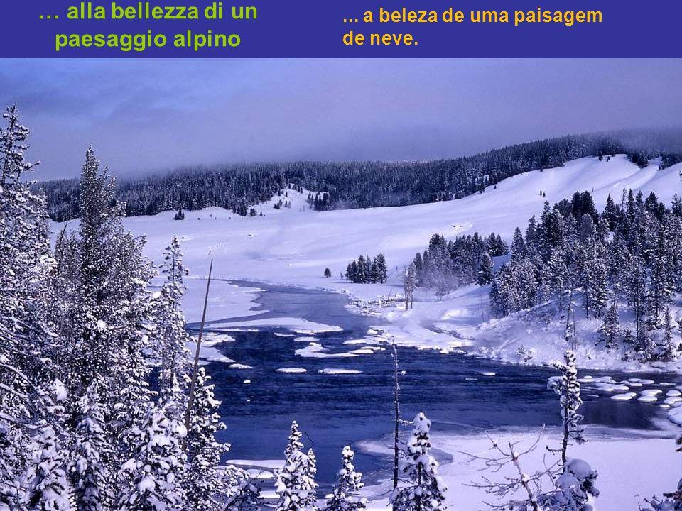 …per la simmetria di un cristallo di neve, fino.... Da simetria de um cristal de neve até...