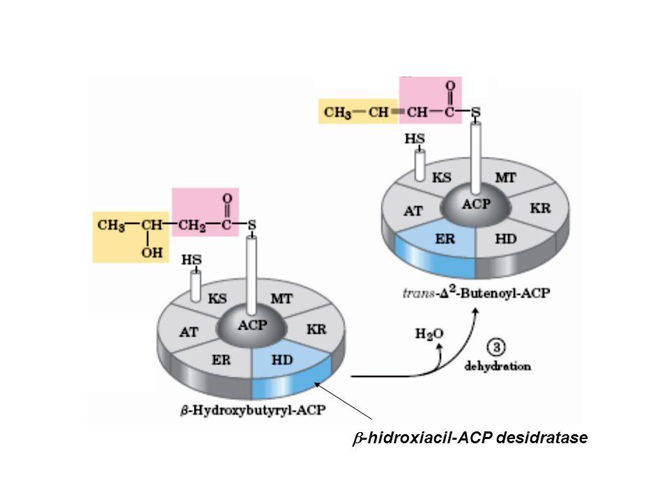  -hidroxiacil-ACP desidratase