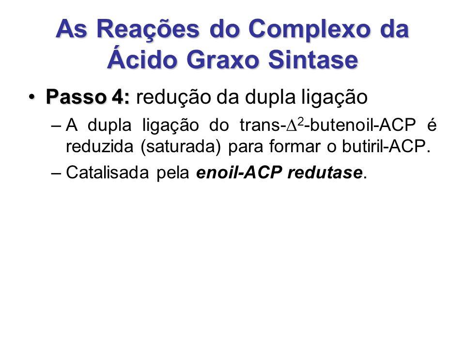 As Reações do Complexo da Ácido Graxo Sintase Passo 4:Passo 4: redução da dupla ligação –A dupla ligação do trans-  2 -butenoil-ACP é reduzida (saturada) para formar o butiril-ACP.