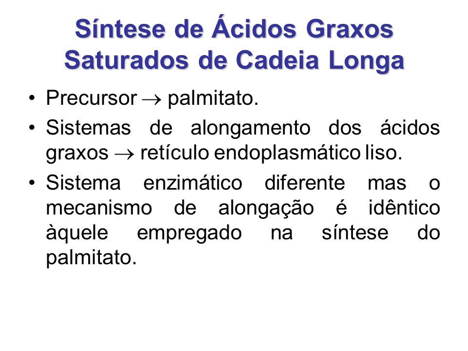 Síntese de Ácidos Graxos Saturados de Cadeia Longa Precursor  palmitato.