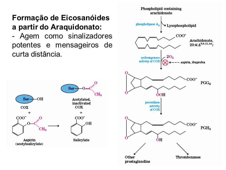 Formação de Eicosanóides a partir do Araquidonato: - Agem como sinalizadores potentes e mensageiros de curta distância.