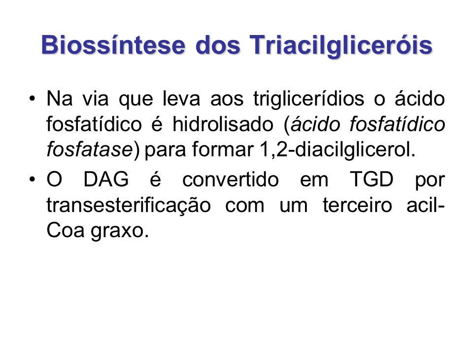 Biossíntese dos Triacilgliceróis Na via que leva aos triglicerídios o ácido fosfatídico é hidrolisado (ácido fosfatídico fosfatase) para formar 1,2-diacilglicerol.