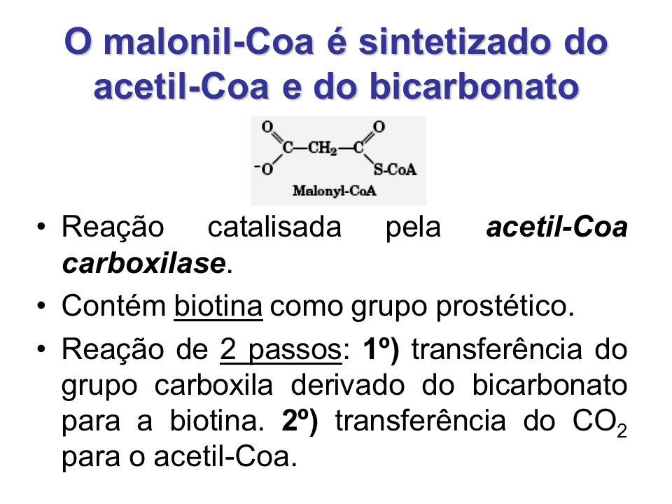 O malonil-Coa é sintetizado do acetil-Coa e do bicarbonato Reação catalisada pela acetil-Coa carboxilase.