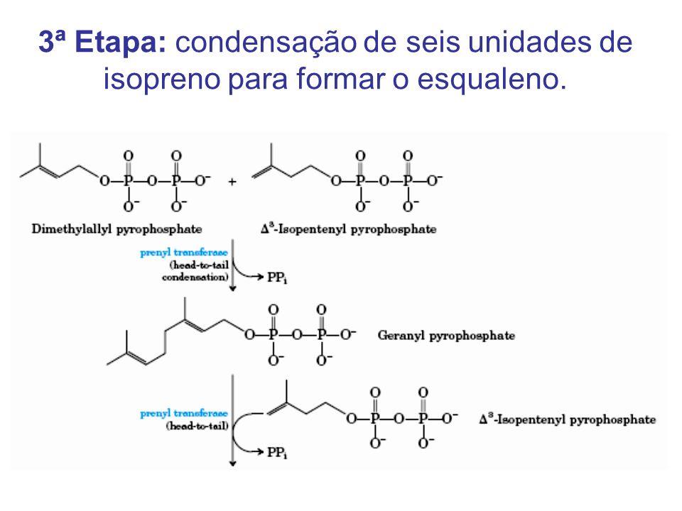 3ª Etapa: condensação de seis unidades de isopreno para formar o esqualeno.
