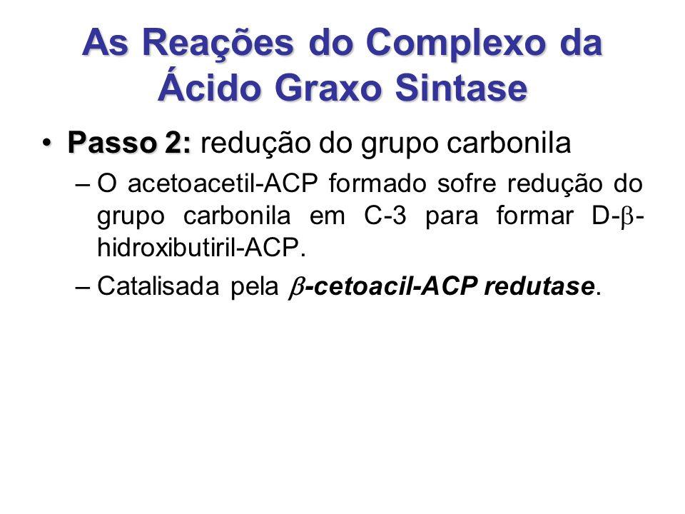 As Reações do Complexo da Ácido Graxo Sintase Passo 2:Passo 2: redução do grupo carbonila –O acetoacetil-ACP formado sofre redução do grupo carbonila em C-3 para formar D-  - hidroxibutiril-ACP.