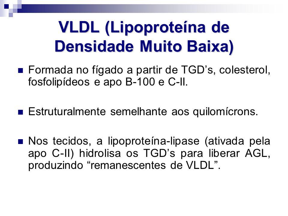 VLDL (Lipoproteína de Densidade Muito Baixa) Formada no fígado a partir de TGD's, colesterol, fosfolipídeos e apo B-100 e C-II. Estruturalmente semelh
