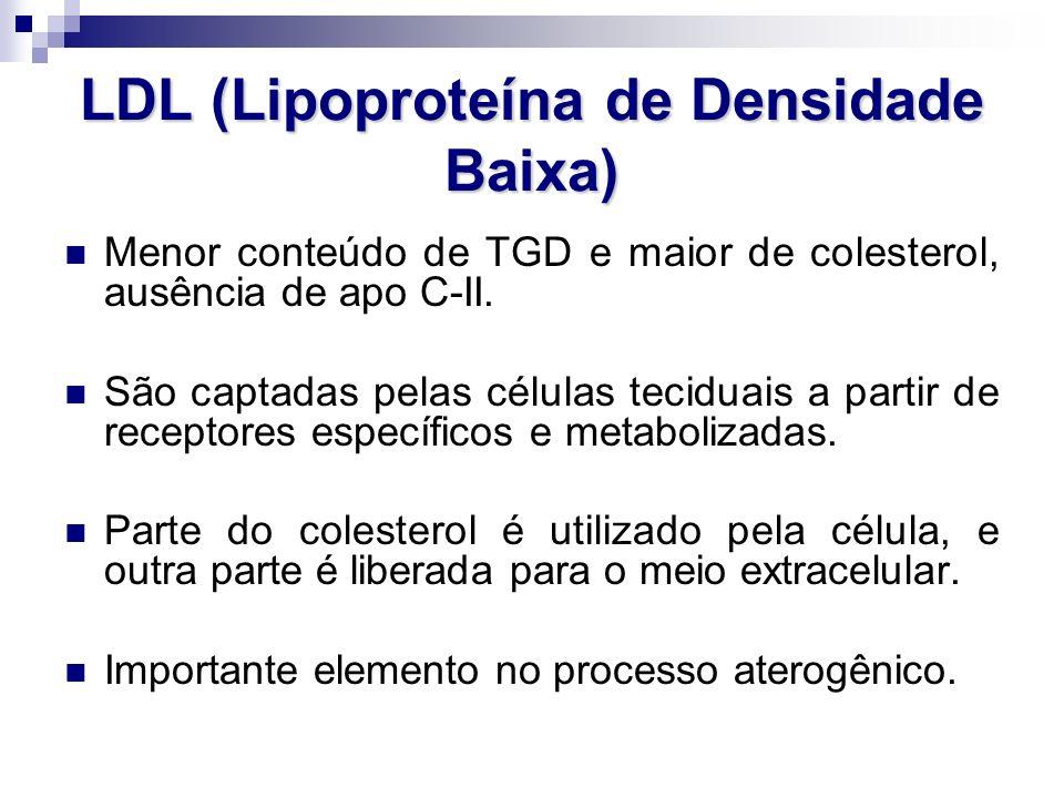 LDL (Lipoproteína de Densidade Baixa) Menor conteúdo de TGD e maior de colesterol, ausência de apo C-II. São captadas pelas células teciduais a partir