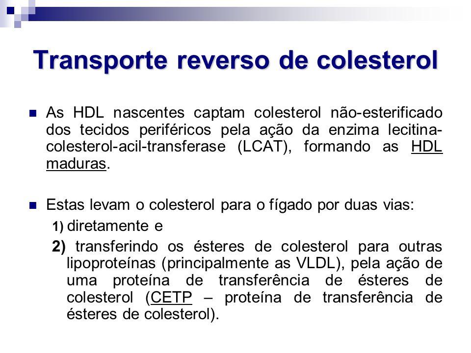 Transporte reverso de colesterol As HDL nascentes captam colesterol não-esterificado dos tecidos periféricos pela ação da enzima lecitina- colesterol-