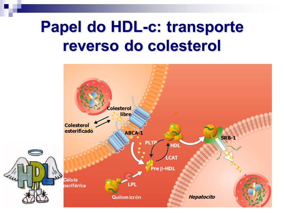 Papel do HDL-c: transporte reverso do colesterol
