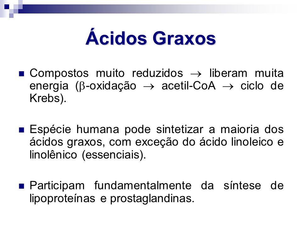 Ácidos Graxos Compostos muito reduzidos  liberam muita energia (  -oxidação  acetil-CoA  ciclo de Krebs). Espécie humana pode sintetizar a maioria