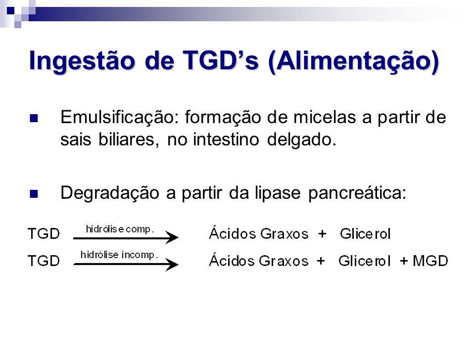 Ingestão de TGD's (Alimentação) Emulsificação: formação de micelas a partir de sais biliares, no intestino delgado. Degradação a partir da lipase panc