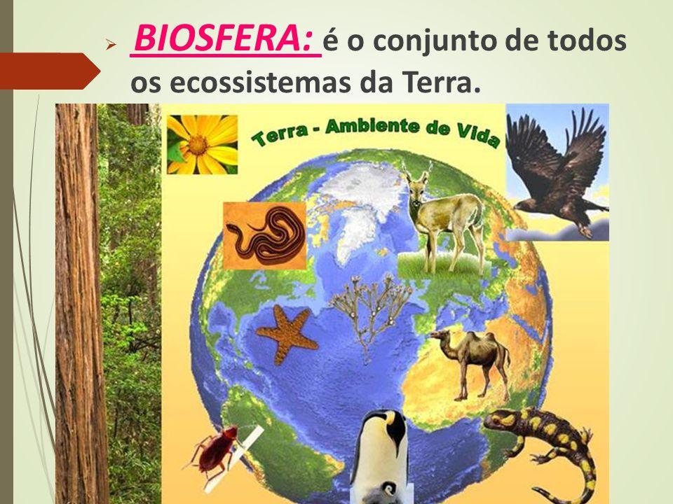  BIOSFERA: é o conjunto de todos os ecossistemas da Terra.