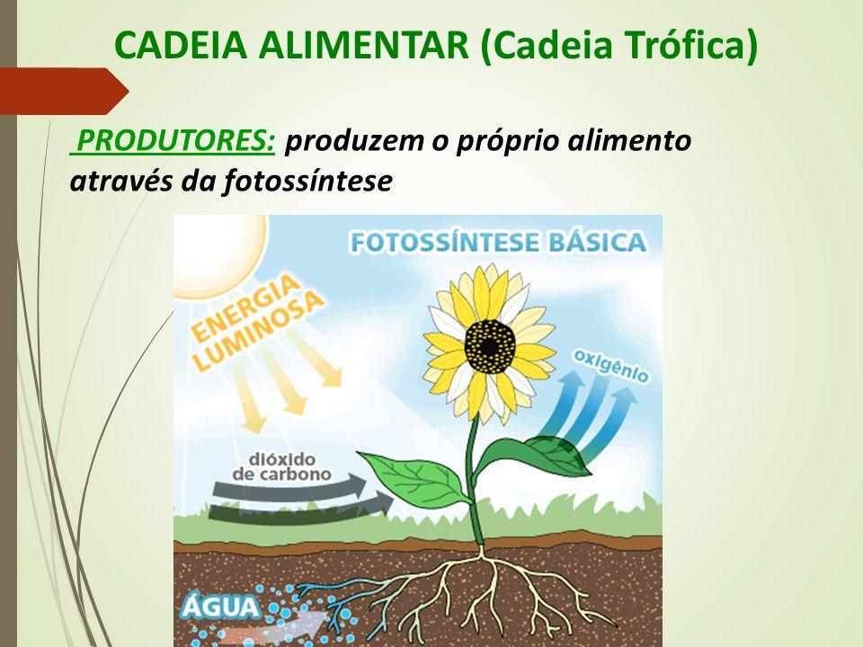CADEIA ALIMENTAR (Cadeia Trófica) PRODUTORES: produzem o próprio alimento através da fotossíntese