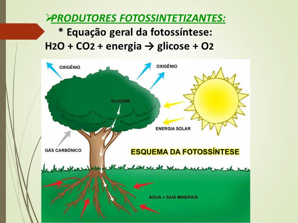  PRODUTORES FOTOSSINTETIZANTES: * Equação geral da fotossíntese: H 2 O + CO 2 + energia → glicose + O 2