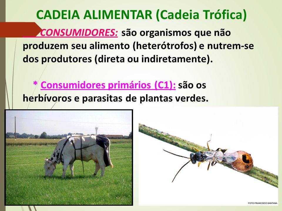 CADEIA ALIMENTAR (Cadeia Trófica) CONSUMIDORES: são organismos que não produzem seu alimento (heterótrofos) e nutrem-se dos produtores (direta ou indi