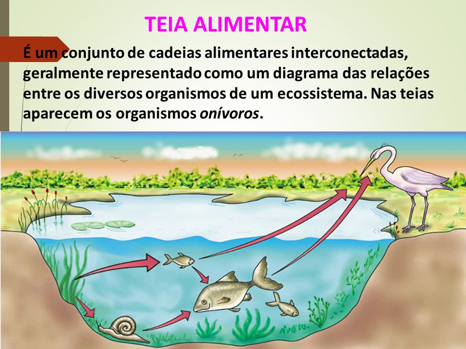 TEIA ALIMENTAR É um conjunto de cadeias alimentares interconectadas, geralmente representado como um diagrama das relações entre os diversos organismo