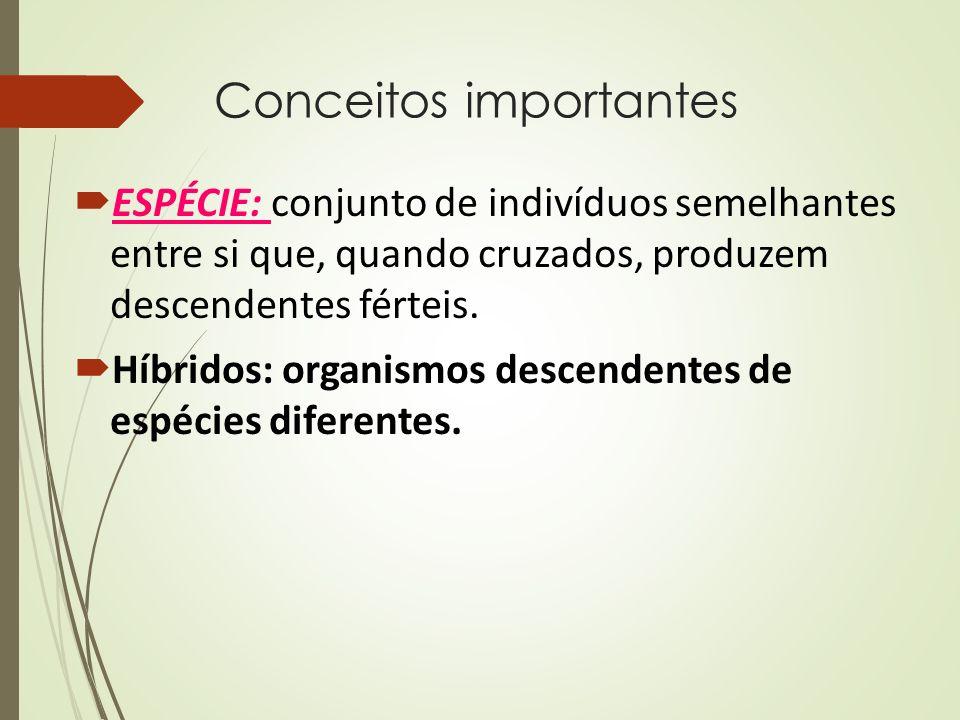 Conceitos importantes  ESPÉCIE: conjunto de indivíduos semelhantes entre si que, quando cruzados, produzem descendentes férteis.  Híbridos: organism