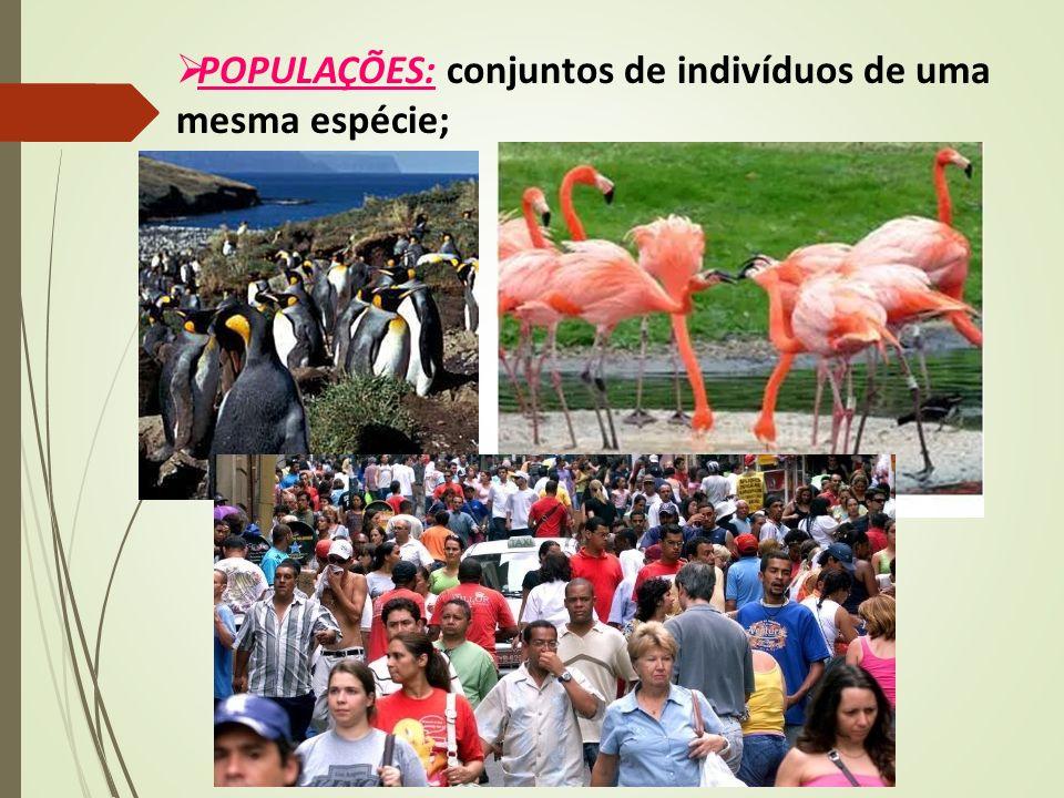  POPULAÇÕES: conjuntos de indivíduos de uma mesma espécie;