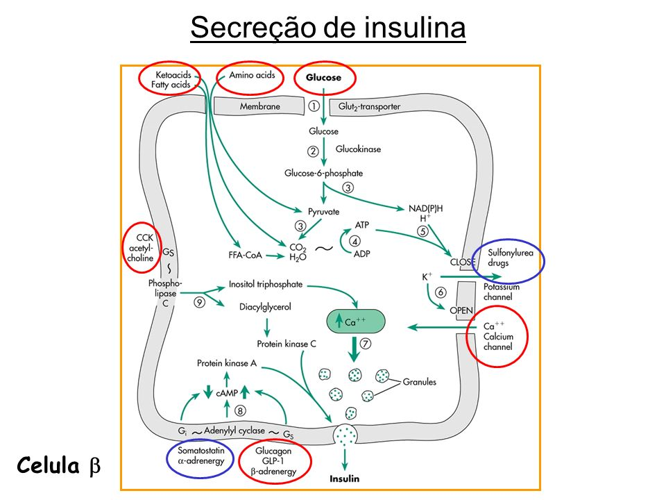 Ácidos Graxos, a longo prazo, diminuem a secreção de insulina.