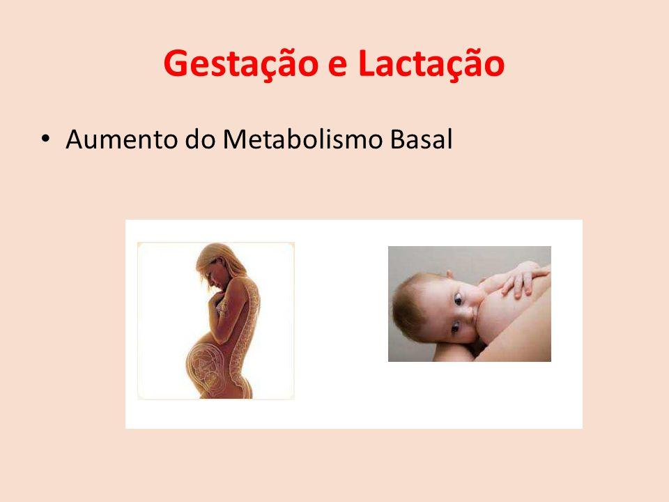 Gestação e Lactação Aumento do Metabolismo Basal