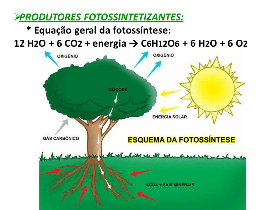  PRODUTORES FOTOSSINTETIZANTES: * Equação geral da fotossíntese: 12 H 2 O + 6 CO 2 + energia → C 6 H 12 O 6 + 6 H 2 O + 6 O 2