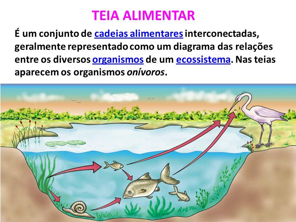TEIA ALIMENTAR É um conjunto de cadeias alimentares interconectadas, geralmente representado como um diagrama das relações entre os diversos organismos de um ecossistema.