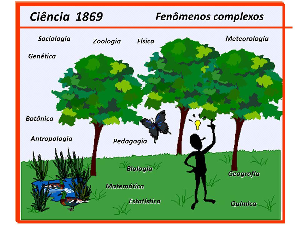 CADEIA ALIMENTAR (Cadeia Trófica)  PRODUTORES FOTOSSINTETIZANTES: * São as plantas verdes, algas e fitoplâncton.