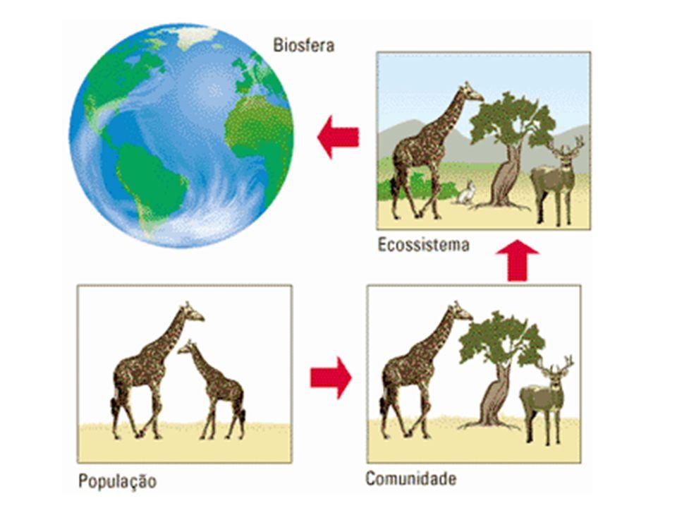 Ecótono: Transição entre dois ecossistemas vizinhos. ECÓTONO Ecossistema 1 Ecossistema 2