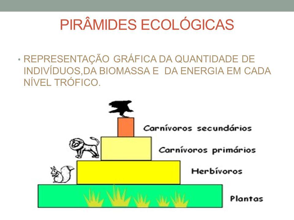 PIRÂMIDES ECOLÓGICAS REPRESENTAÇÃO GRÁFICA DA QUANTIDADE DE INDIVÍDUOS,DA BIOMASSA E DA ENERGIA EM CADA NÍVEL TRÓFICO.