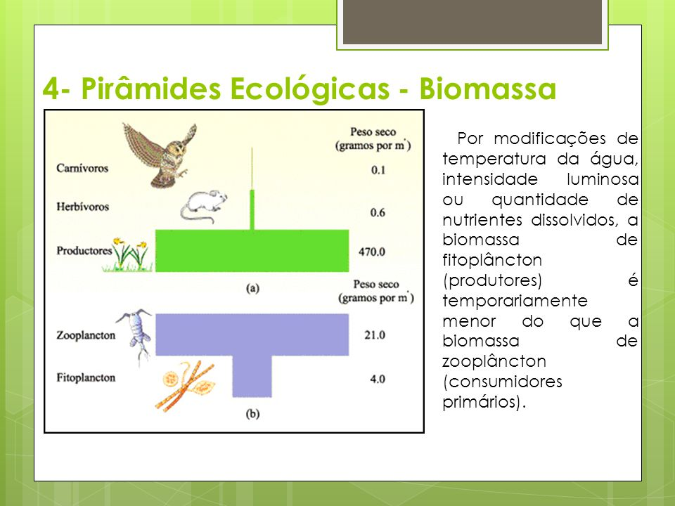 4- Pirâmides Ecológicas - Biomassa Por modificações de temperatura da água, intensidade luminosa ou quantidade de nutrientes dissolvidos, a biomassa de fitoplâncton (produtores) é temporariamente menor do que a biomassa de zooplâncton (consumidores primários).