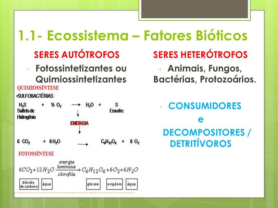 1.1- Ecossistema – Fatores Bióticos SERES AUTÓTROFOS - Fotossintetizantes ou Quimiossintetizantes - Algas, Vegetais e bactérias - PRODUTORES SERES HET