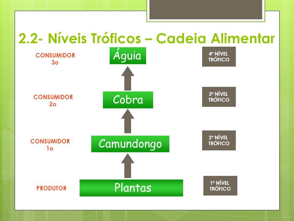 2.2- Níveis Tróficos – Cadeia Alimentar Plantas Camundongo Cobra Águia PRODUTOR CONSUMIDOR 1o CONSUMIDOR 2o CONSUMIDOR 3o 1º NÍVEL TRÓFICO 2º NÍVEL TRÓFICO 3º NÍVEL TRÓFICO 4º NÍVEL TRÓFICO