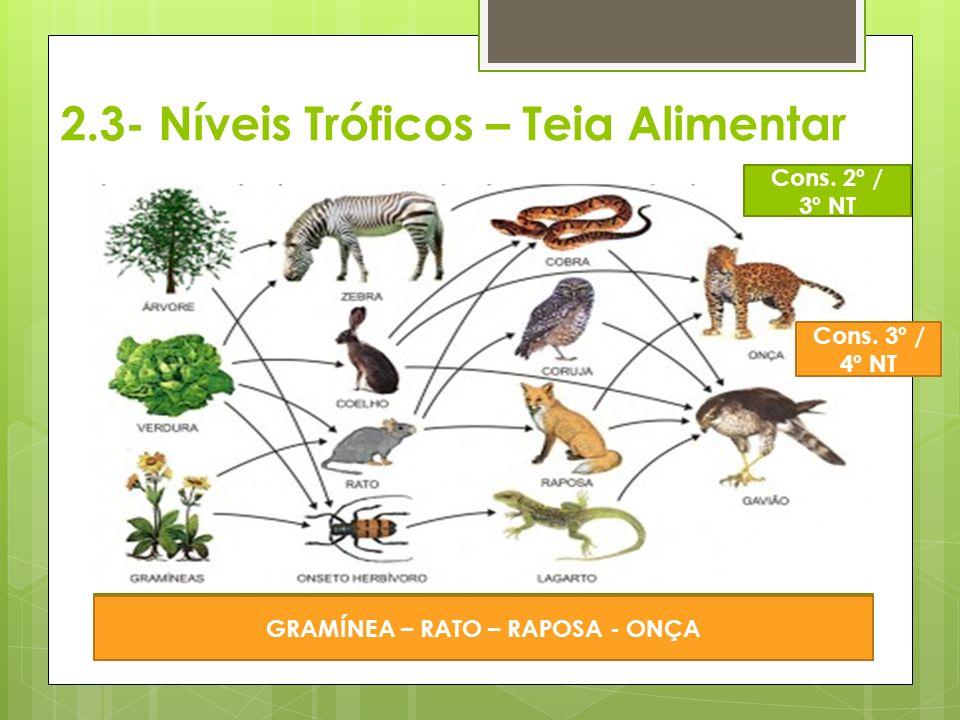 2.3- Níveis Tróficos – Teia Alimentar ÁRVORE – ZEBRA - ONÇA Cons. 2º / 3º NT GRAMÍNEA – RATO – RAPOSA - ONÇA Cons. 3º / 4º NT